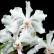 Achat vente orchidee botanique vanda javierae