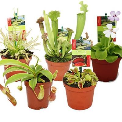 5 Plantes carnivores