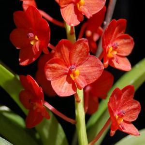Aroonsri beauty 1