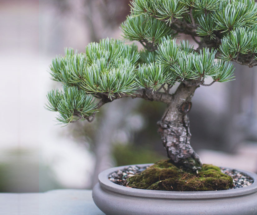 Cat bonsai