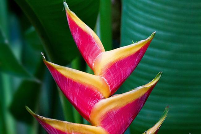 Otras plantas
