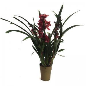 Cymbidium orchidee fleurie livraison rouge