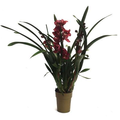 Orchidee Cymbidium hybride Red