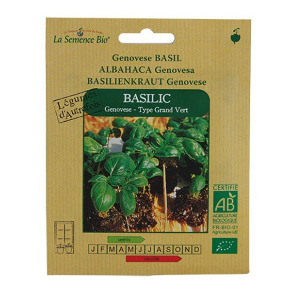 Graines bio basilic genovese