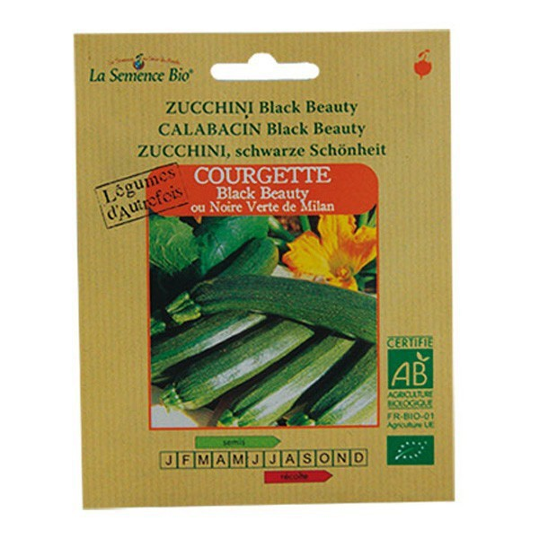 Graines bio courgette longue black beauty