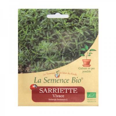 GRAINES BIO - SARRIETTE VIVACE
