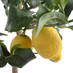 I grande 18712 citrus limon d20 70 80cm citronnier net
