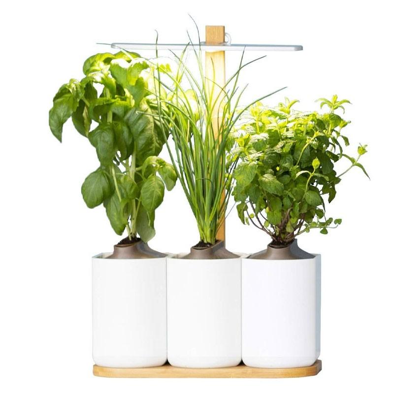 Lilo jardin dinterieur basilic menthe ciboulette 1