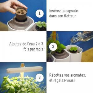 Lilo jardin dinterieur basilic menthe ciboulette 2