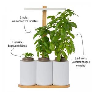 Lilo jardin dinterieur basilic menthe ciboulette