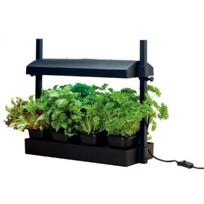 Micro jardin noir avec lampe 11w
