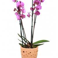 Orchidee pot deco