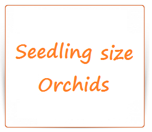 Orchids seedling size