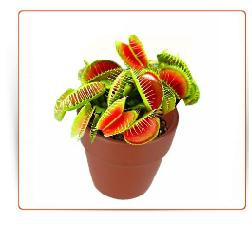 plante carnivore achat