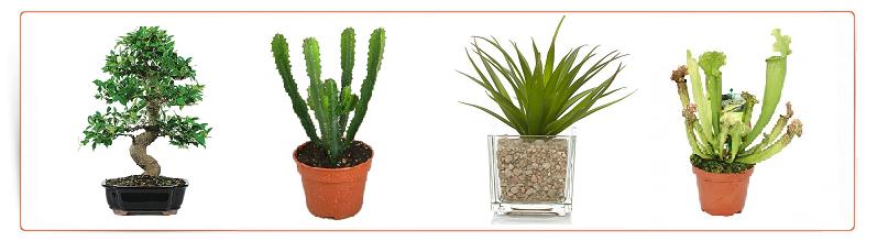 Plantes exotiques a vendre achat