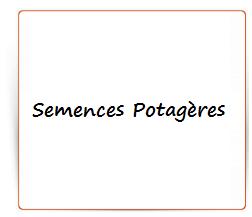 Semences potageres