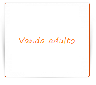 Vanda adulto 1