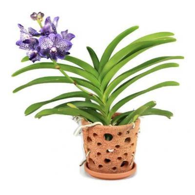 1  Töpfe Terracotta für Orchideen.